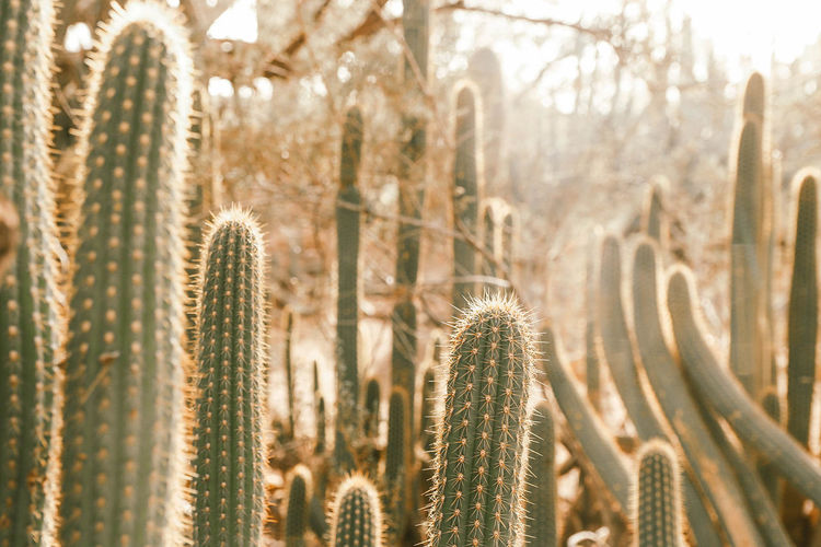 Close-up of cactus plants growing in forest