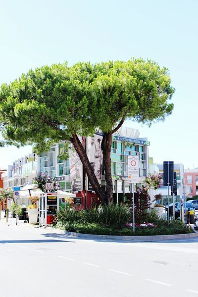 Bibione Italy Tree Nature Green