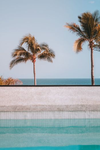 Palm tree by swimming pool against clear sky