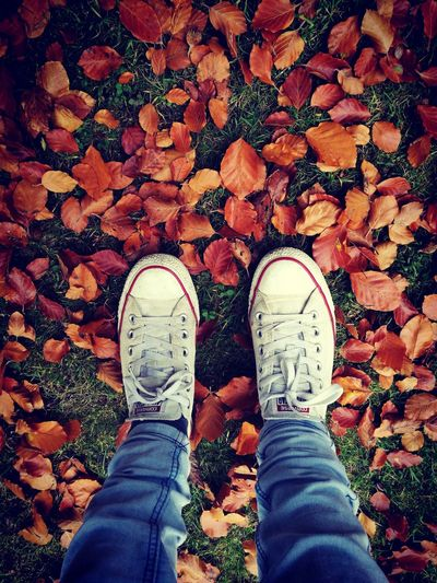 Standing Shoe Personal Perspective Autumn Autumn Leaves Converse Taking Photos Capture The Moment Freshness Outdoors Nature Walking In The Woods My Best Photo