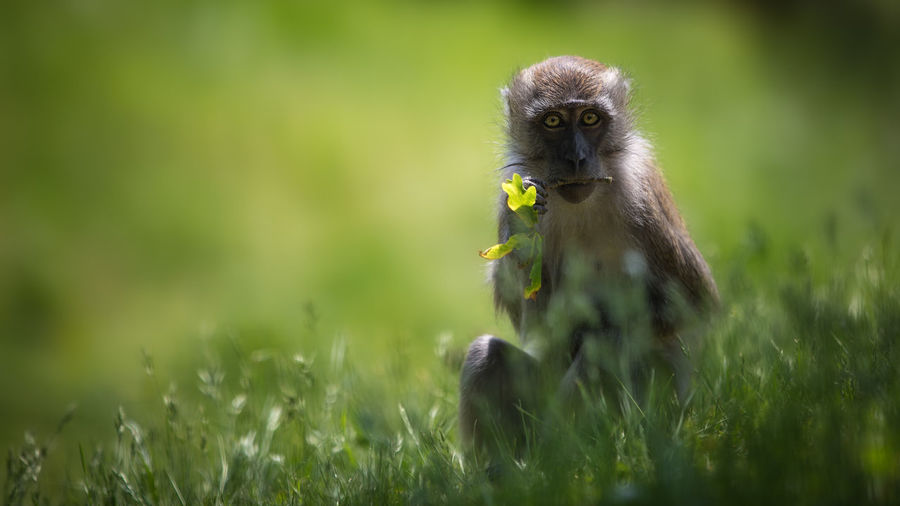 Animal Themes Animal Wildlife Animals In The Wild Bird Close-up Day Grass Green Color Mammal Monkey Nature No People One Animal Outdoors