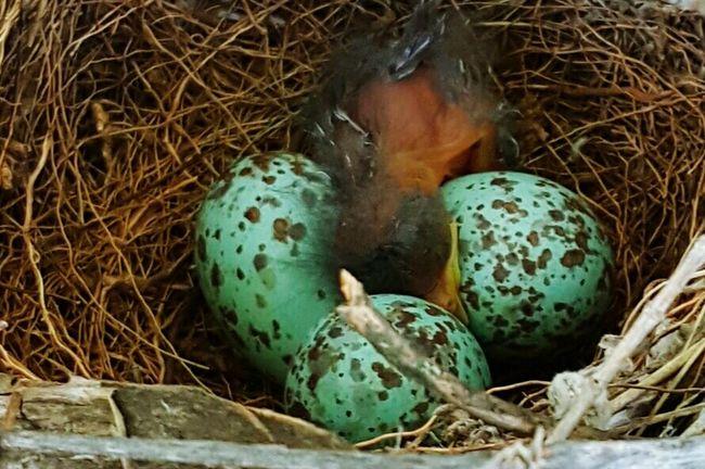 Wildlife & Nature In My Garden Taking Photos Birds Nest life and death Bird Watching