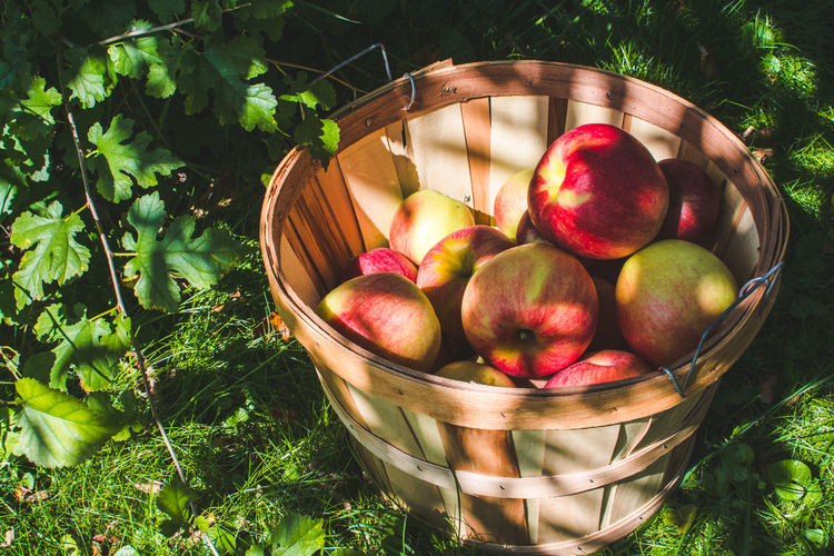 Apple Apple - Fruit Basket Container Day Food Food And Drink Freshness Fruit Grass Green Color Growth Healthy Eating High Angle View Leaf Nature No People Outdoors Plant Plant Part Ripe Wellbeing