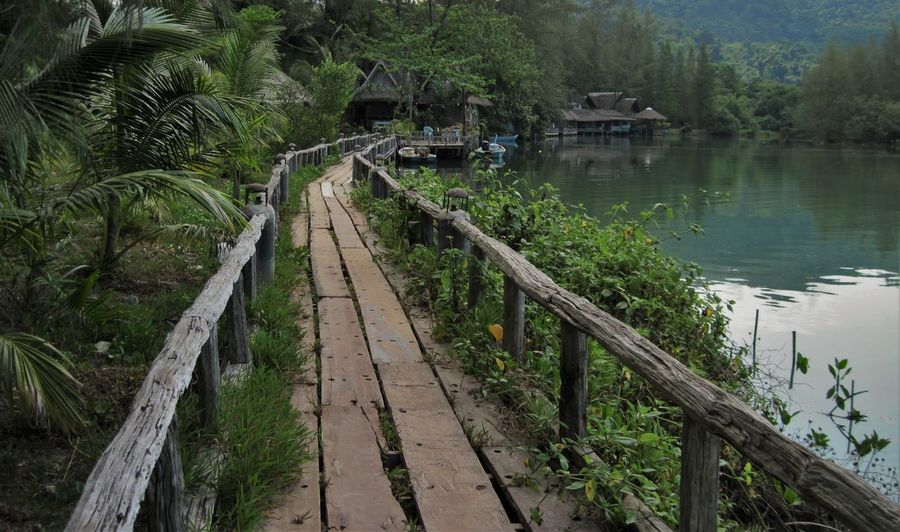 National Park Palm Tree Shanti Wooden Bridge Elephant Elephant Island Fearn Handrail  Kho Chang Paradise Rickerty Bridge Shantytown Thialand Wooden Bridge Over Water Tranquility Beauty In Nature Tranquil Scene Scenics No People Nature Outdoors Day Water The Traveler - 2018 EyeEm Awards