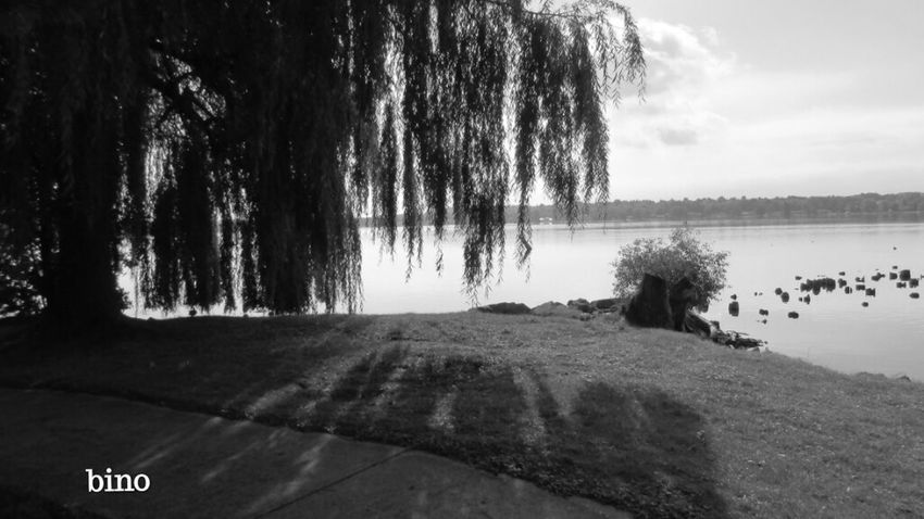 Out Shooting Early Morning Light Under The Willow Light And Shadow Black And White Photography Lake Cadillac Pure Michigan