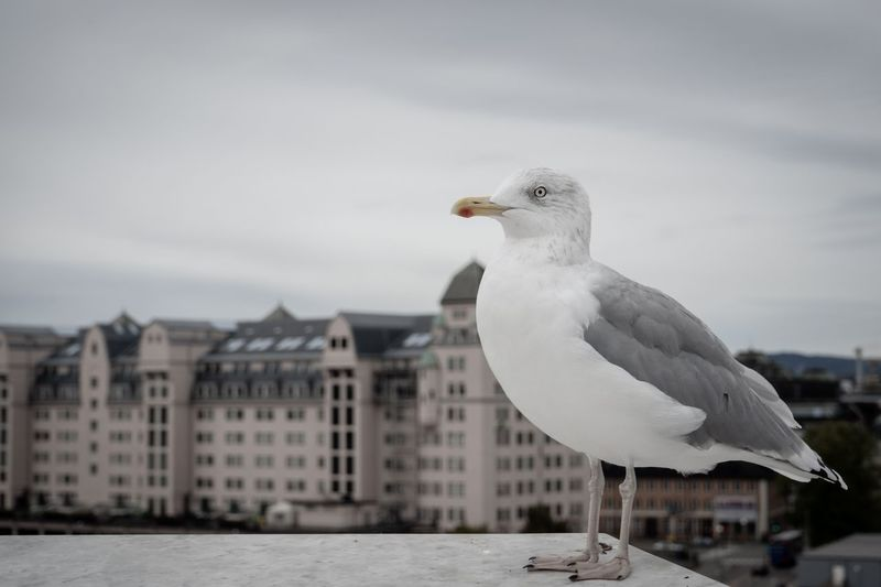Eyes Bird Animal Themes Vertebrate Animal One Animal Animals In The Wild Architecture Animal Wildlife Building Exterior Seagull Nature No People White Color Focus On Foreground