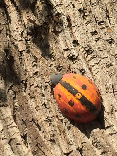 Tree Burk Ladybug