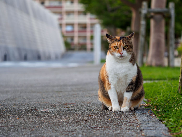 Portrait of cat sitting on footpath