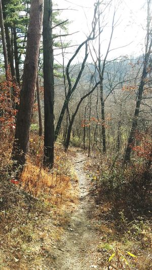 PVP Leafs Trees Hiking Trail Nature Autumn Outdoors Plesant Valley Park Plants Pennsylvania