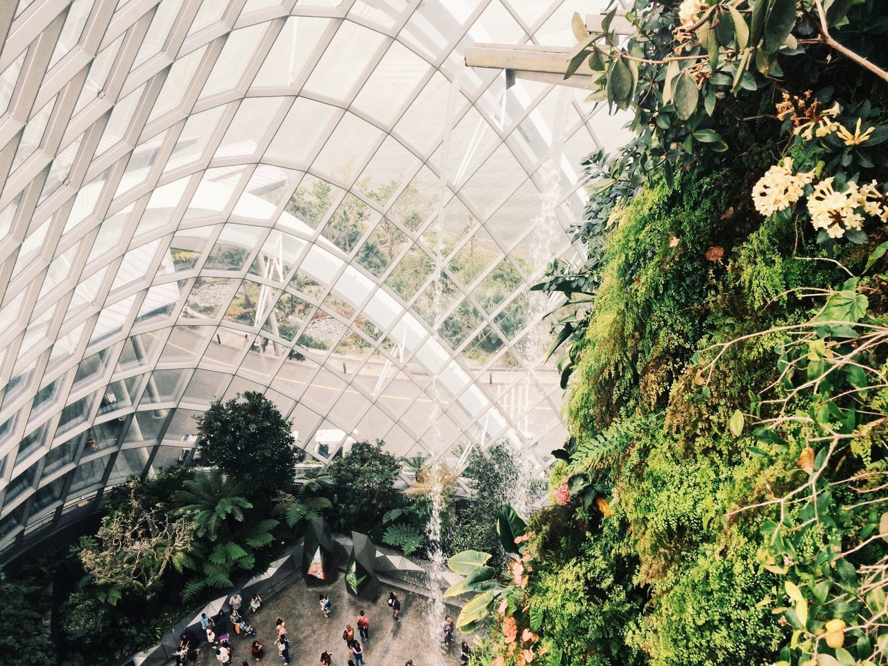 plant, growth, greenhouse, architecture, indoors, leaf, day, nature, tree, plant nursery, built structure, botanical garden, modern, no people, close-up