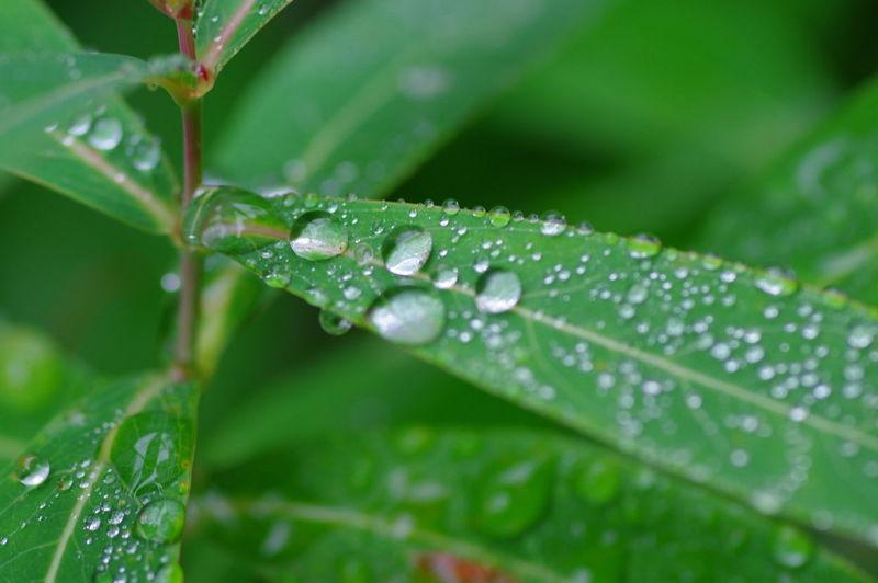 Rain Drop Water