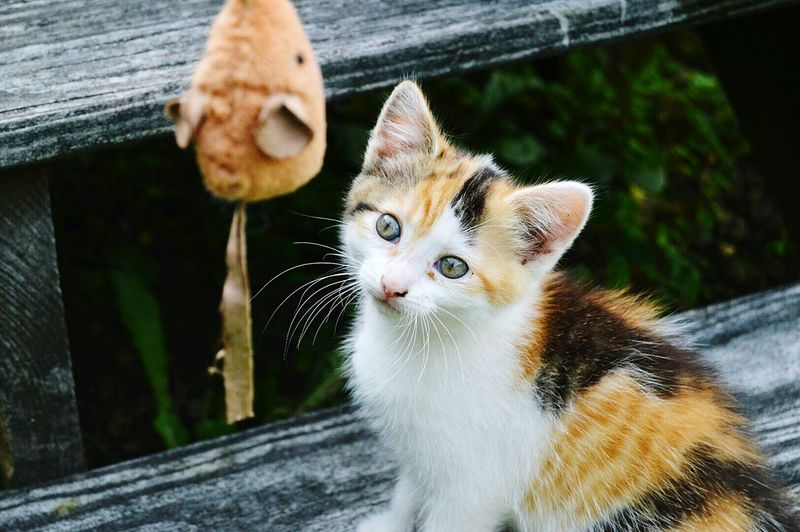 High angle view portrait of kitten