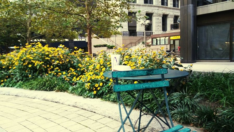 table for one Baltimore City New To EyeEm Baltimore Park Flower Architecture Building Exterior Plant Built Structure Domestic Garden Empty Backyard Outdoor Cafe Pathway Absence Growing Bench Blooming Park Bench Open Door In Bloom Garden