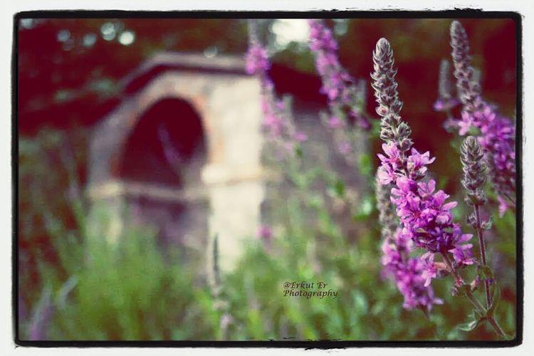 Erzincan Kemaliye Unuttugumkokular Flowers First Eyeem Photo