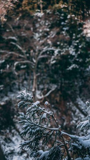 Quiet Snowy