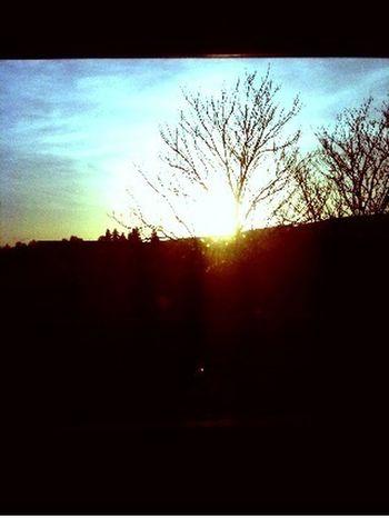 Sun With A Tree