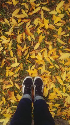 Autumn Leaves Salta, Argentina