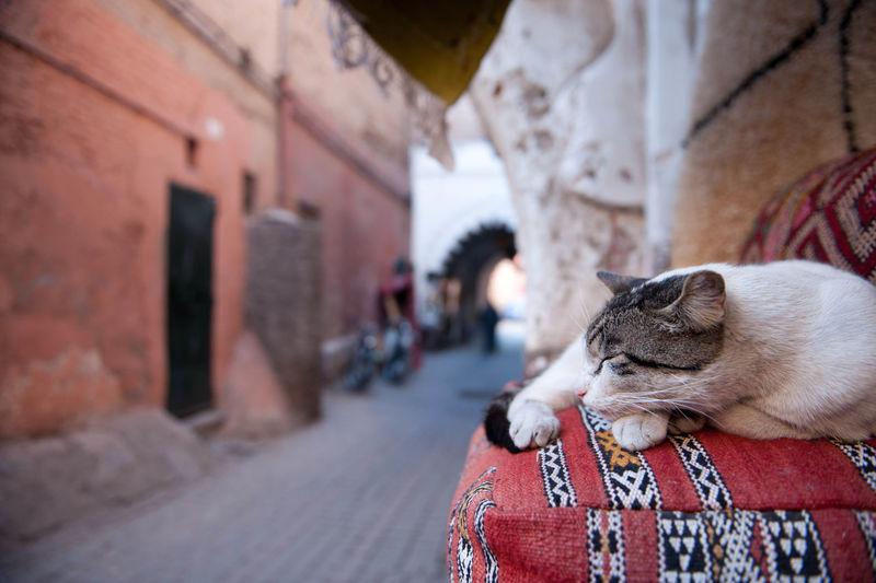 Cat sleeping on street