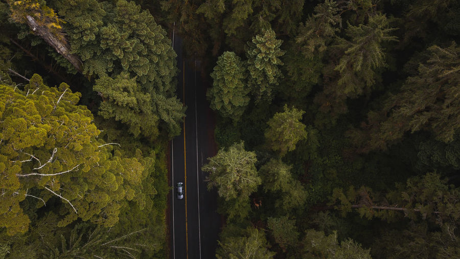 Aerial view drone shot down of vehicle drive on forested road amongst giant redwood trees in forest