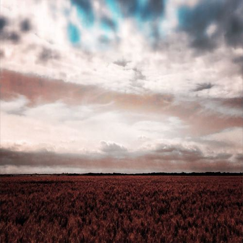 Corn fields on dog walk Field Agriculture Nature Tranquility Rural Scene Beauty In Nature Landscape Tranquil Scene Sky Cloud - Sky Scenics Growth Plough No People Day Outdoors Plowed Field