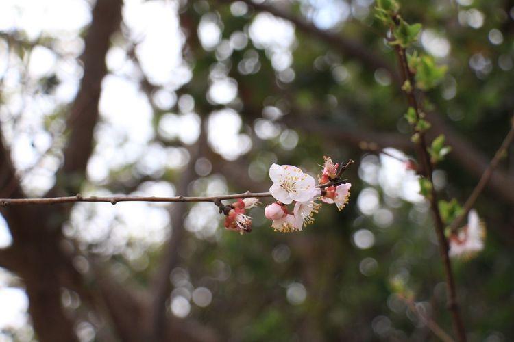 EyeEm Selects Popular Photos Flower Beauty In Nature Tree Butiful♥ Flowers,Plants & Garden