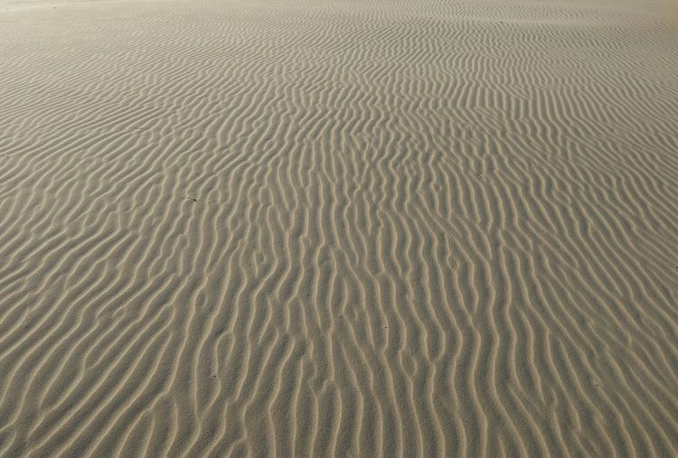 Color Palette sand meets wind Taking Photos Beach Sand Sand Dune Sand & Sea Enjoying Life South Africa Nature Patterns Patterns In Nature Outdoor Beauty Outdoor Pattern Colour Of Life Beautiful World Beauty Of Nature Outdoor Photography Beautifully Organized