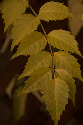 Beauty In Nature Close-up Day Fragility Freshness Growth Leaf Nature No People Outdoors Plant EyeEmNewHere