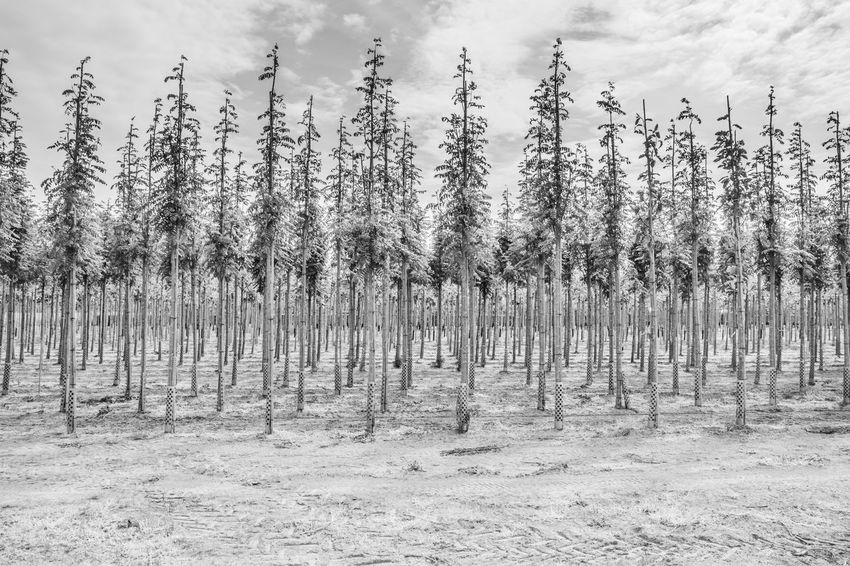 tree planting site Array Array Of Trees Growing Tranquility Tree Trees Weather White Color Fresh On Eyeem