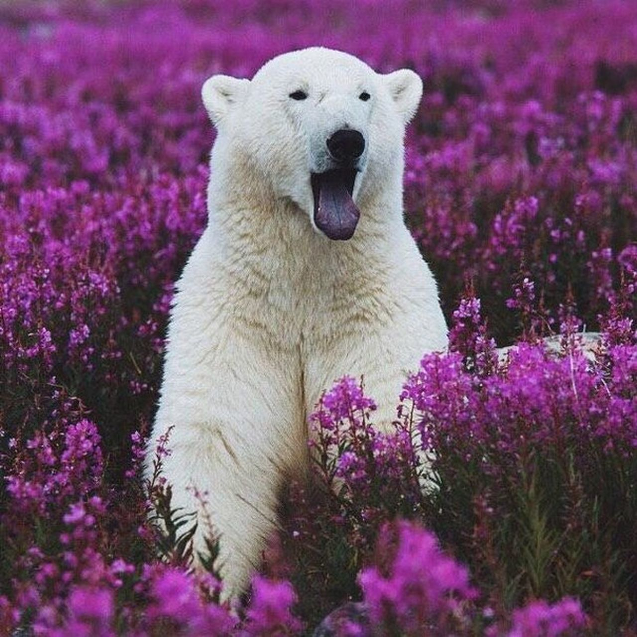 one animal, animals in the wild, animal wildlife, animal themes, bear, nature, mammal, outdoors, no people, day, flower, beauty in nature
