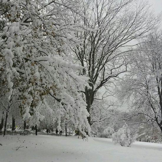 First Snow Wintertime Snow ❄ Winter Trees