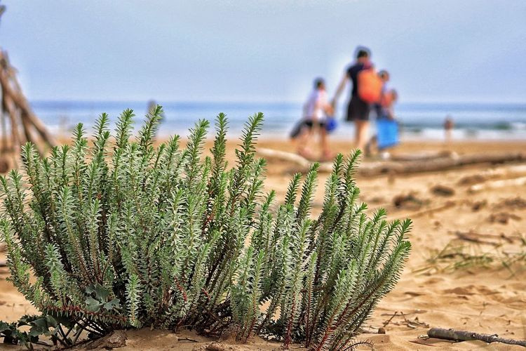 Plants Against Defocused Family Walking At Beach