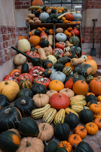 Pumpkins and squashes in back yard