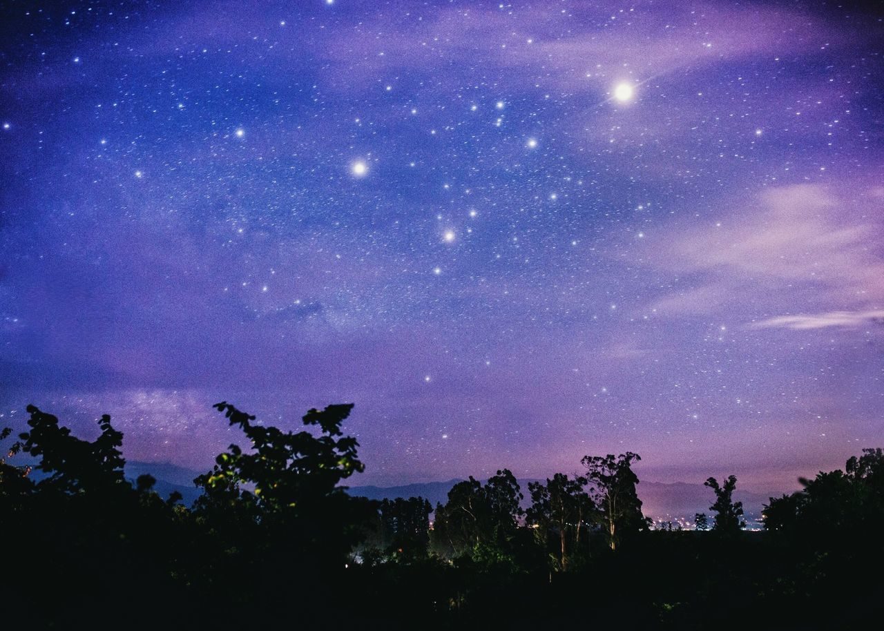 tree, night, sky, star - space, beauty in nature, tranquility, silhouette, scenics, astronomy, tranquil scene, outdoors, nature, no people, low angle view, galaxy, milky way, space