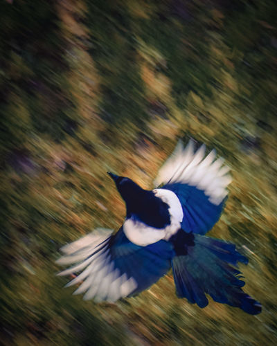 Feniks Exceptional Photographs EyeEm Nature Lover Eye4photography  Poland Animals In The Wild Animal Themes Bird Spread Wings Flying Parrot Blue Feather  Beauty Multi Colored Animal Wing Motion Tail