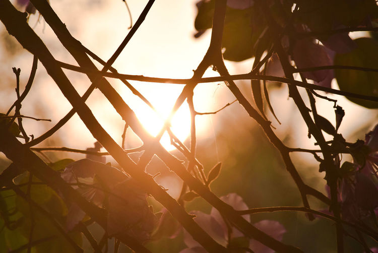 Sunshine No People Nature Sunset Sunlight Outdoors Sky Tree Close-up Day Beauty In Nature Plant Silhouette