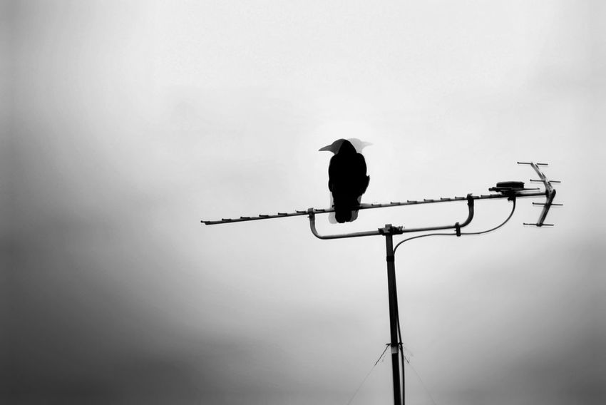 Capture The Moment Darkness Animal Wildlife One Animal Perching Bird Silhouette Black And White Fine Art Snapshots Of Life Tranquility Animal Themes Fantasy Light And Shadow Still Life Animals EyeEmNewHere Street Photography Nature Fragility Full Frame Detail Sigma EyeEm Best Shots 17_04 The Secret Spaces Resist Art Is Everywhere TCPM The Photojournalist - 2017 EyeEm Awards