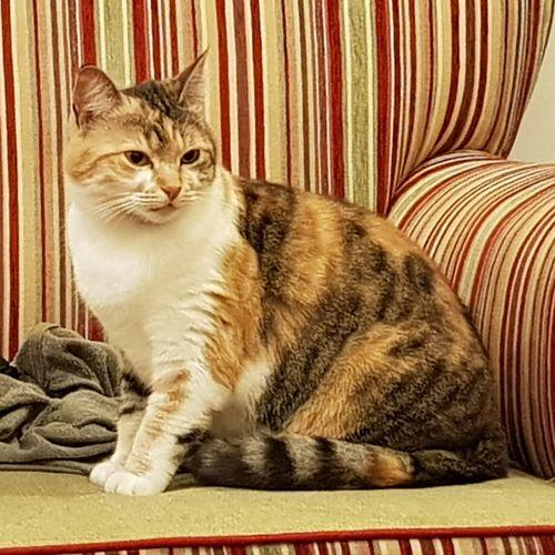 Petal. Cats Cats Of EyeEm Wildcat