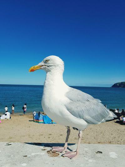 EyeEm Selects Bird Water Sea Beach Seagull Sand Blue Flamingo Swan Sky