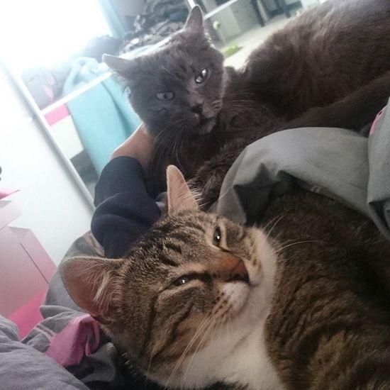 Die ultimativen Kuschel-Girls 😺😺 Tshaga_the_cat Wassilita_the_cat