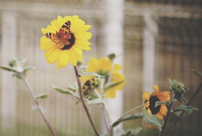 Carl Zeiss Jena Sonnar で Flower を Snapshot なう。 Nature OpenEdit EyeEm