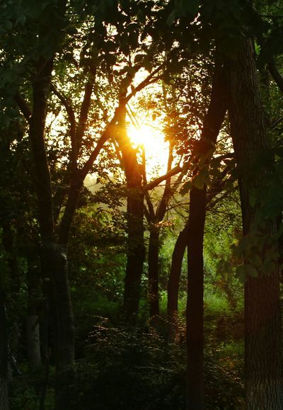 Sunset Tree Sunlight Nature Sun Lens Flare Outdoors WoodLand Sunset Tranquility Beauty In Nature Beauty Beijing Beauty China