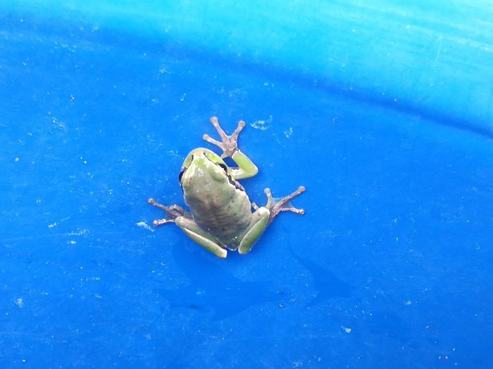 Frog One Animal