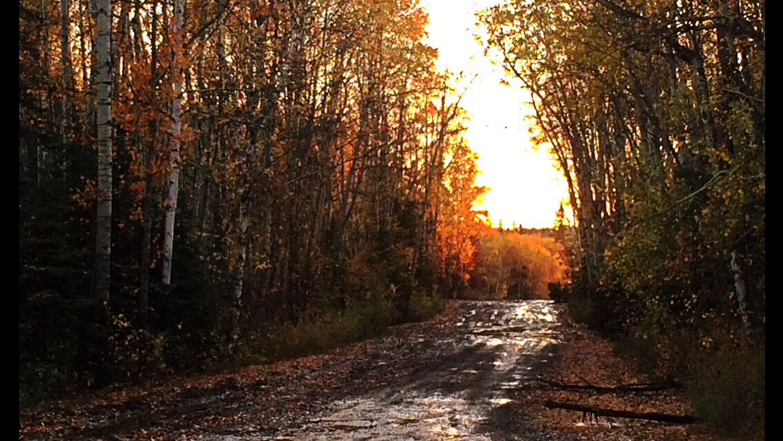 the way forward, tree, diminishing perspective, vanishing point, tranquility, autumn, dirt road, road, nature, forest, tranquil scene, transportation, beauty in nature, footpath, empty road, orange color, change, scenics, outdoors, growth