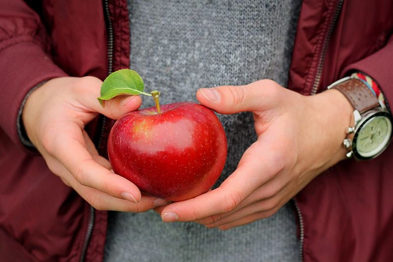 Apple Leaf Leaf Sweater Autumn Fall Watch Apple Holding Apple Holding Fruit Man Fruit Healthy Eating Red Food Midsection Human Hand Hand Holding Food And Drink Wellbeing Human Body Part Freshness Adult Close-up Casual Clothing People