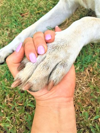 This Is Strength Together We Can Overcome Everything Man And Dog Hand In The Paw Dogpower Loveislove Heart ❤ The Power Of Love