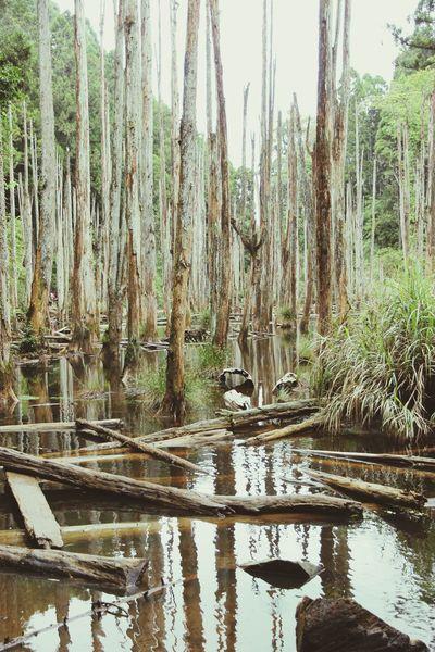 雨後 忘憂森林