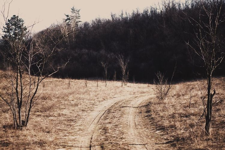 Dirt road Tree Plant Land Tranquility Field The Way Forward Nature Tranquil Scene No People Bare Tree Non-urban Scene Landscape Direction Environment Day Beauty In Nature Dirt Road Forest Road Outdoors The Great Outdoors - 2018 EyeEm Awards