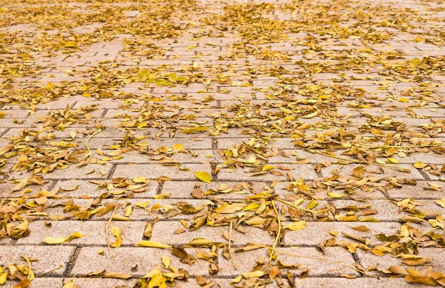 Favourite season Beauty In Nature Autumn Leaves Groundlevel Outdoors Nature Nopeople Yellow Season  Autumn Park Leaves Floor Leaves On The Ground Ground Closeup Leaf Fall Coldweather Winter Season  Lowangleview Day Nature Close-up Change Full Frame Backgrounds No People