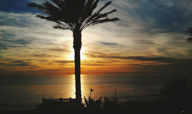 Firsteyeemphoto Naked Palm Tree Sunset Silouhette Beachphotography Warmth Skyporn Clouds And Sky Ocean View Oceanlife Colors Of Nature