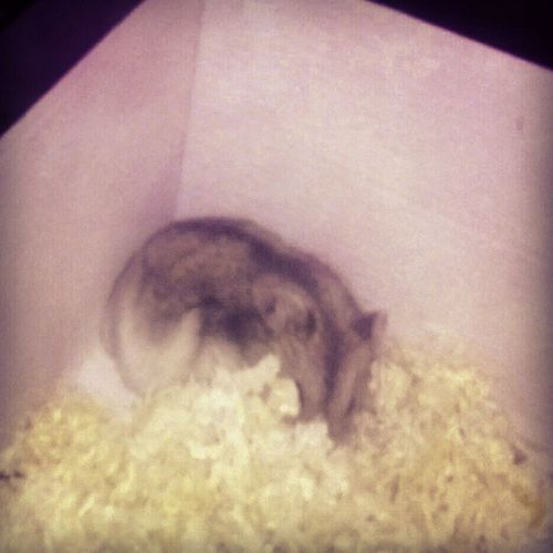 Perfect hiding place, no one will find me now! Whereareyou Where Are  You HamsterJokerhamsterjoker